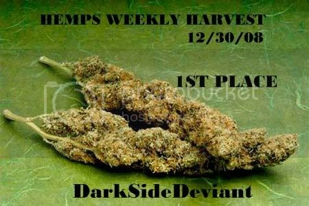 5889412301st_place.jpg Hemps Weekly Harvest #1 picture by halifaxleafs
